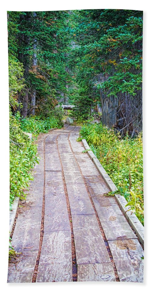 'brainard Lake' Beach Towel featuring the photograph Colorado Rocky Mountain Forest Path by James BO Insogna