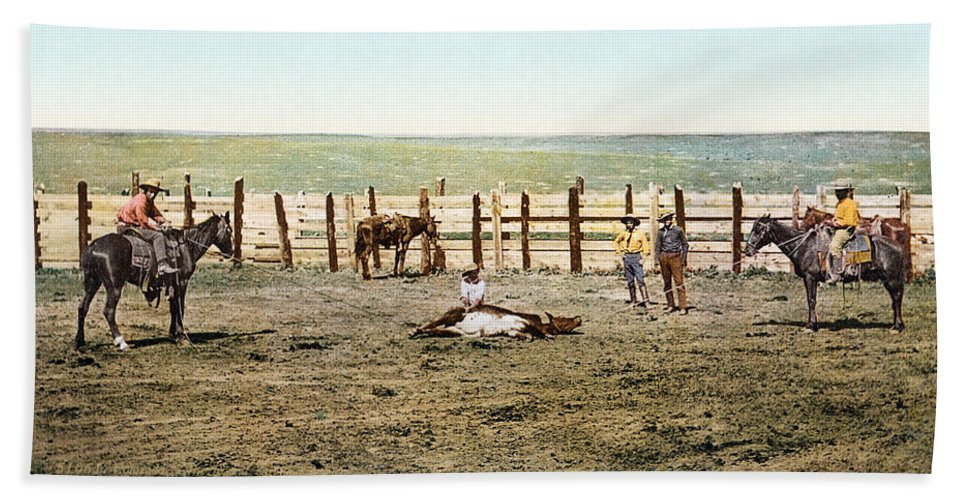 1890s Beach Towel featuring the photograph Colorado: Roping A Steer by Granger