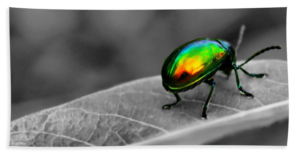 Bug Beach Towel featuring the photograph Colorful Bug by Gaby Swanson