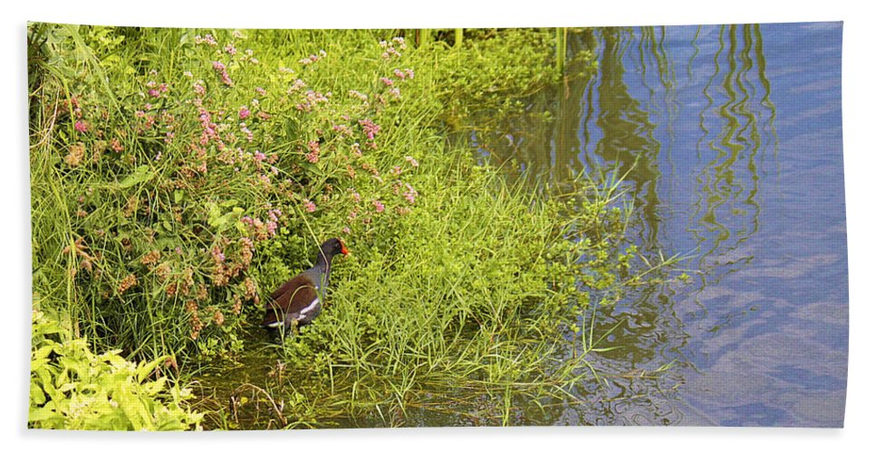 Roena King Beach Towel featuring the photograph Common Moorhen At The Waters Edge by Roena King