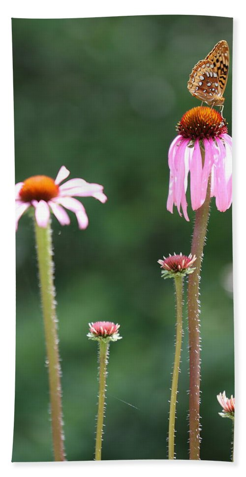 Butterfly Beach Towel featuring the photograph Coneflowers And Butterfly by Daniel Reed