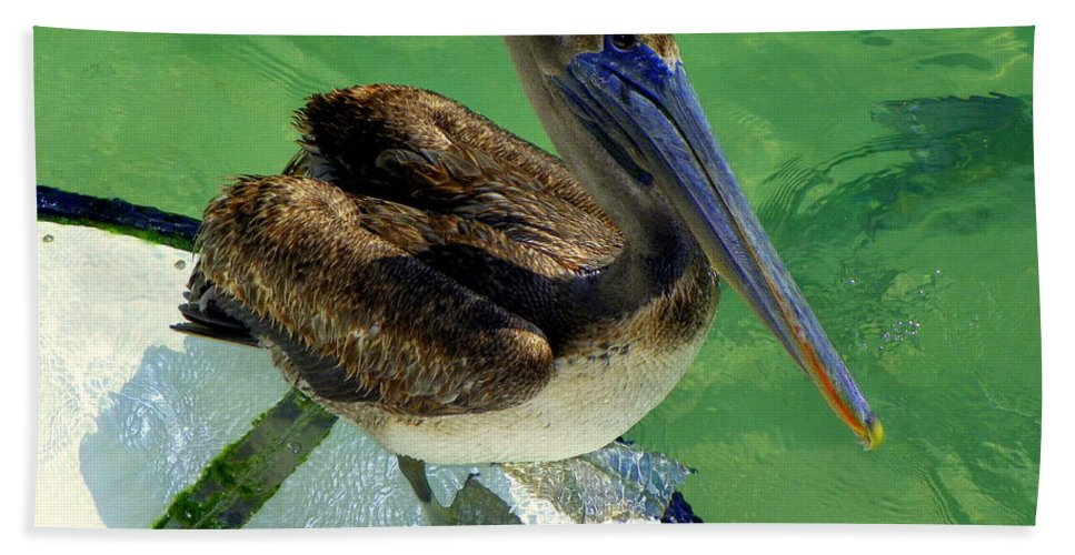 Birds Beach Towel featuring the photograph Cool Footed Pelican by Karen Wiles