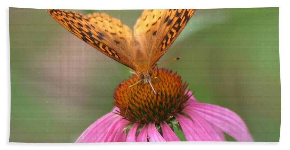 Butterfly Beach Towel featuring the photograph Coordinating Colors by Living Color Photography Lorraine Lynch