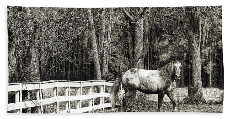 Horse Beach Towel featuring the photograph Coosaw - Outside The Fence Black And Wite by Scott Hansen