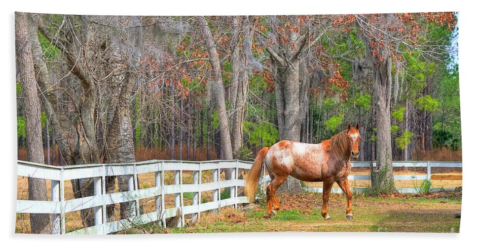 Equestrian Beach Towel featuring the photograph Coosaw - Outside The Fence by Scott Hansen