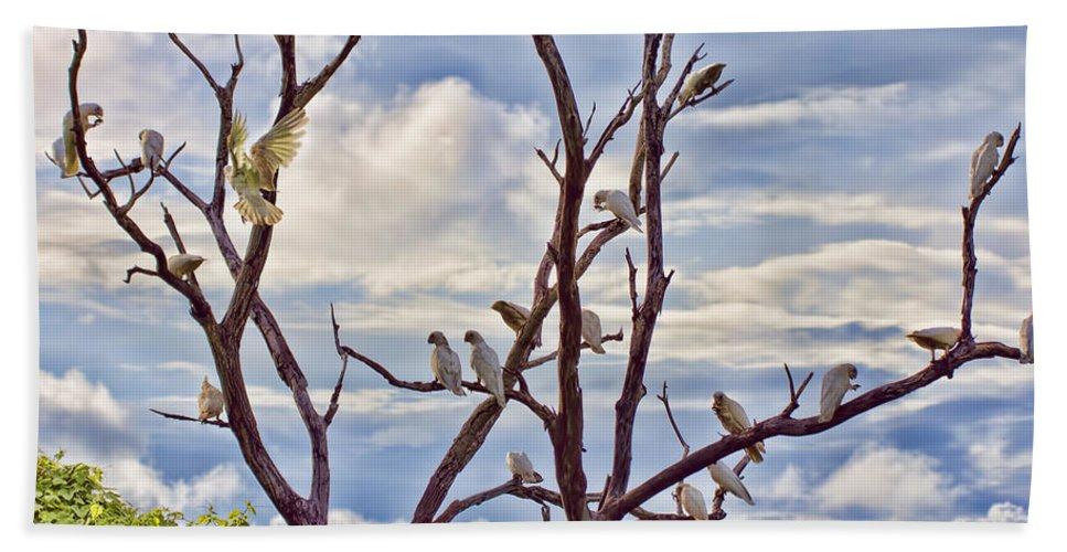 Corellas Beach Towel featuring the photograph Corella Tree by Douglas Barnard
