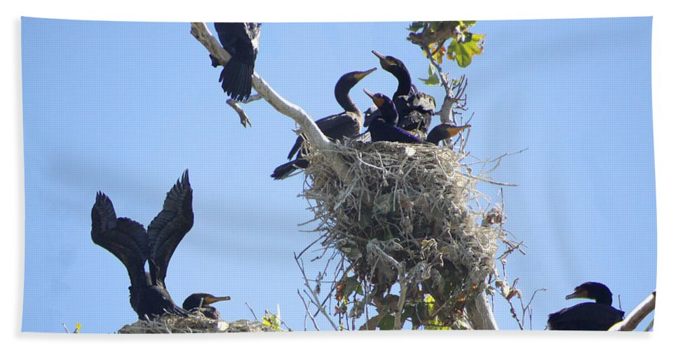 Cormorants Beach Towel featuring the photograph Cormorants Nesting by Diana Haronis