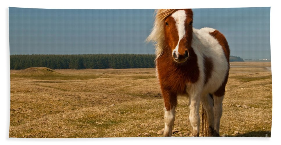 Pony Beach Towel featuring the photograph Cornish Pony by Rob Hawkins