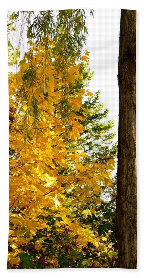 Autumn Beach Towel featuring the photograph Country Color 19 by Will Borden