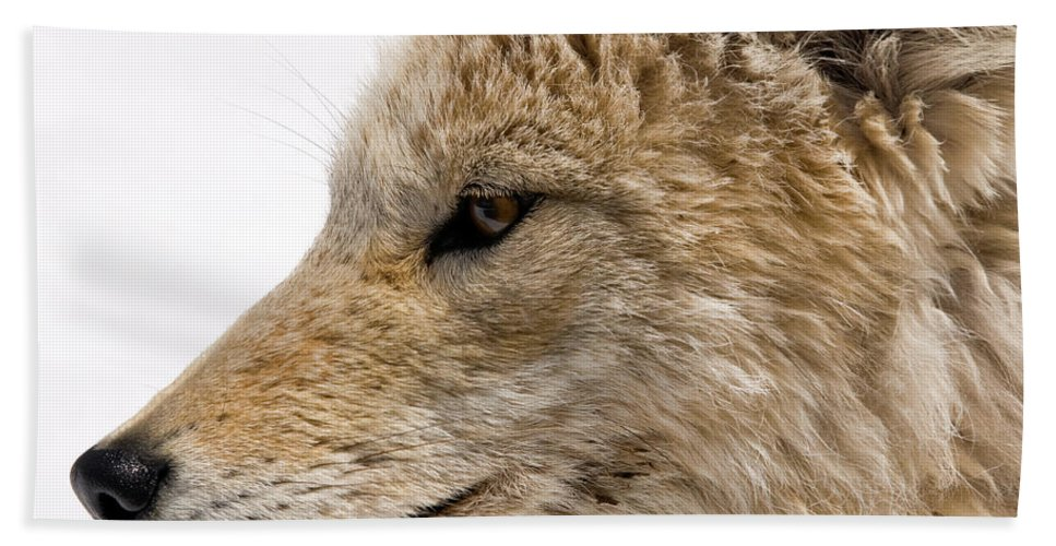 Coyote Beach Towel featuring the photograph Coyote by Steve Stuller