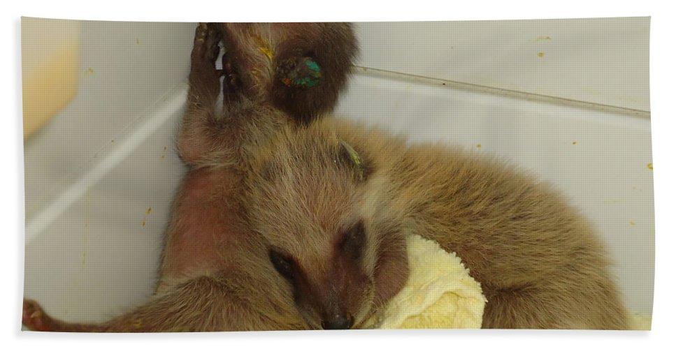 Raccoons Beach Towel featuring the photograph Cuddle Bears by Art Dingo