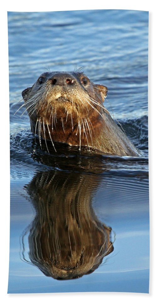 Otter Beach Towel featuring the photograph Curious by Chris Davis