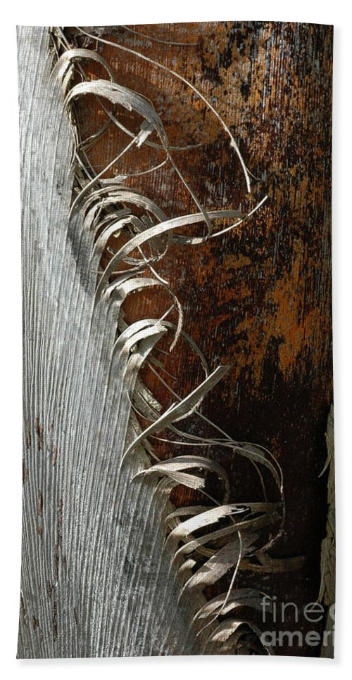 Bark Beach Towel featuring the photograph Curly Bark Of A Palm Tree by Mike Nellums