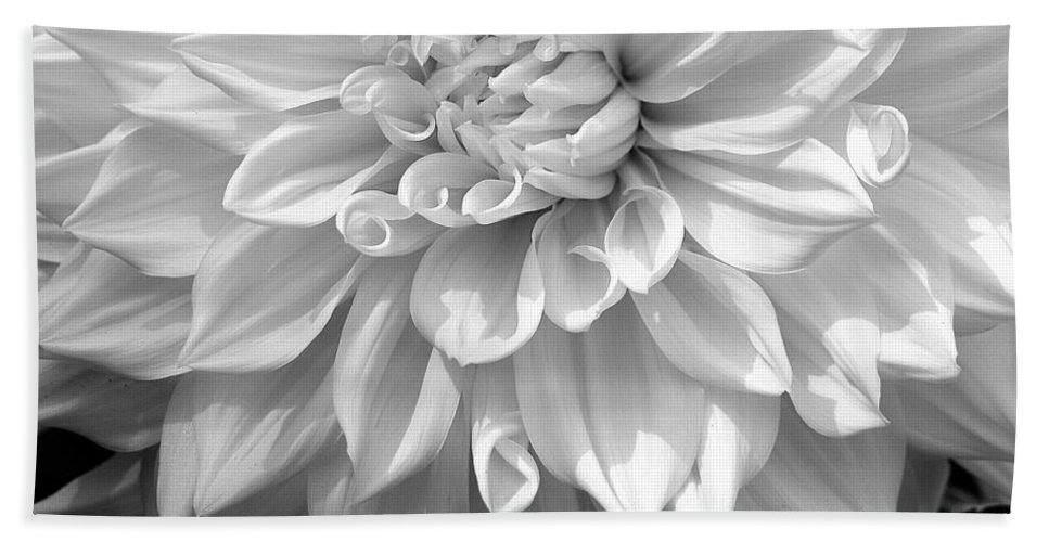 Dahlia Beach Towel featuring the photograph Dahlia In Black And White by Laurel Talabere