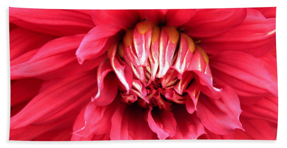 Dahlia Beach Towel featuring the photograph Dahlia In Red by Laurel Talabere