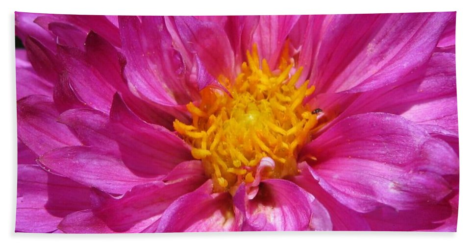 Dahlia Beach Towel featuring the photograph Dahlia Named Pink Bells by J McCombie