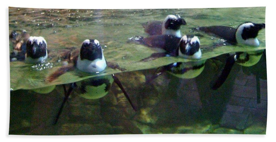 Tiny Beach Towel featuring the photograph Dancing Penguins by Susan Wyman