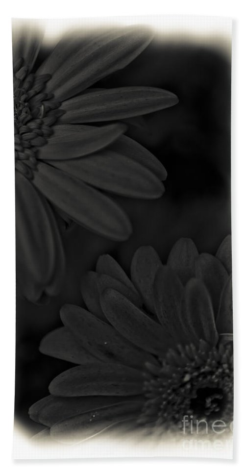 Flowers Beach Towel featuring the photograph Darkness To Live by Kim Henderson