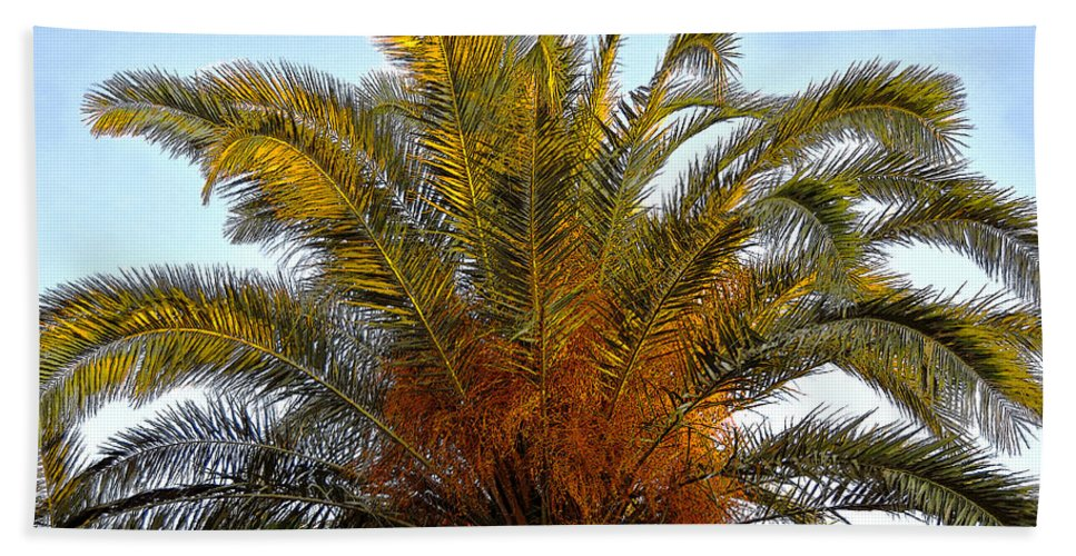 Date Palm Tree Beach Towel featuring the painting Date Palm by David Lee Thompson