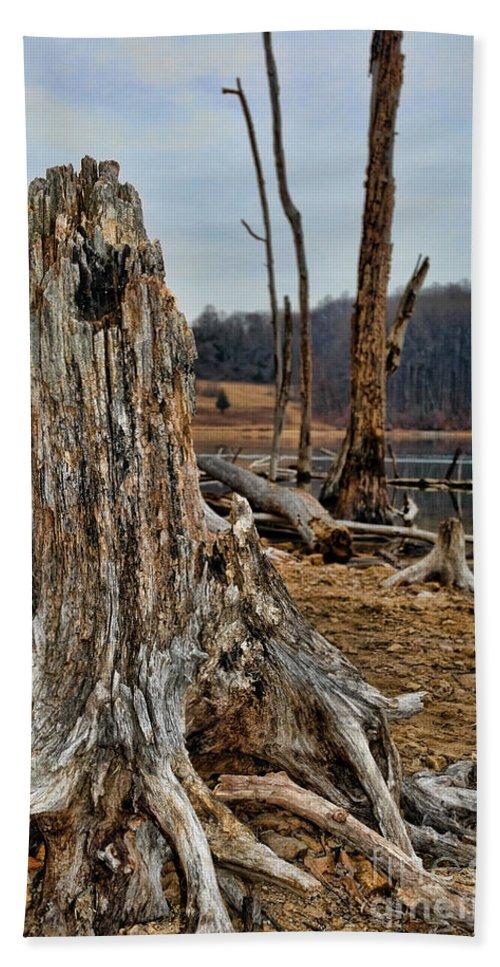 Dead Wood Beach Towel featuring the photograph Dead Wood by Paul Ward