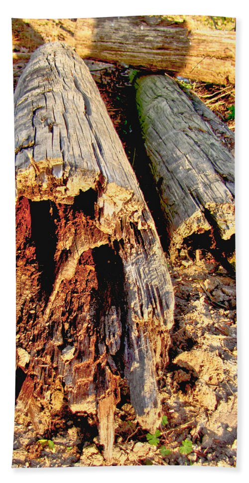 Nature Beach Towel featuring the photograph Decay by Debbie Portwood
