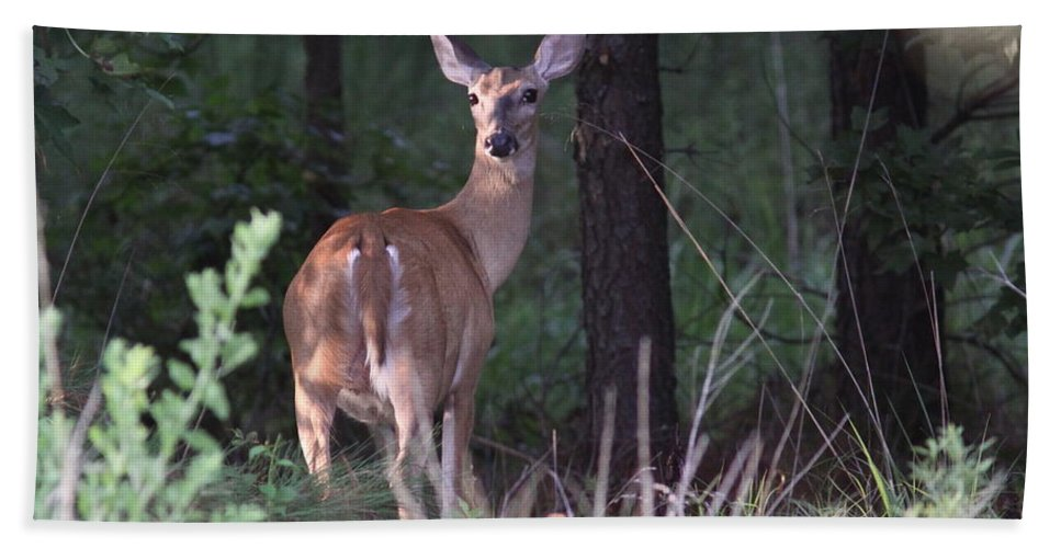 Deer Beach Towel featuring the photograph Deer - Doe - Nearing The Edge by Travis Truelove