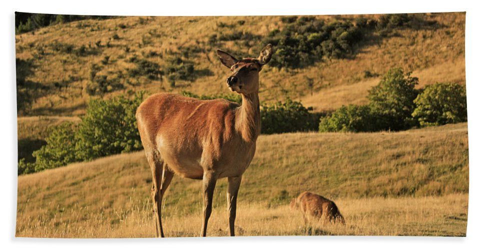 Deer Beach Towel featuring the photograph Deer On Mountain 2 by Pixel Chimp