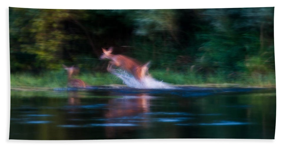 Heron Haven Beach Towel featuring the photograph Deer Splash by Edward Peterson
