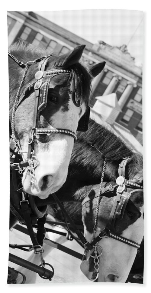 Horses Beach Towel featuring the photograph Denver Stock Show by Colleen Coccia