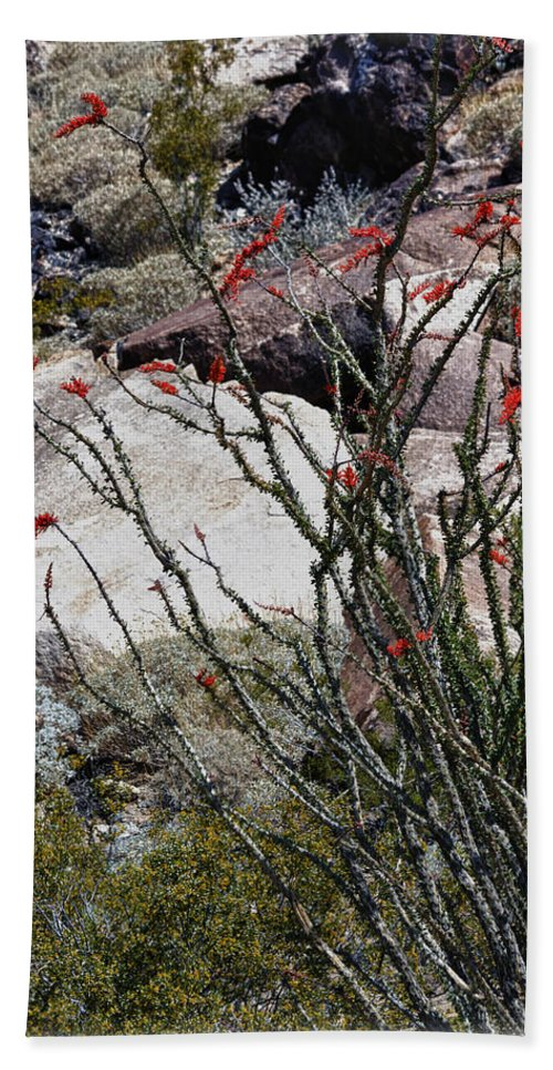 Ocotillo Beach Towel featuring the photograph Desert Spring by Linda Dunn