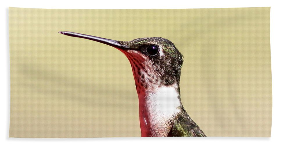 Hummingbird Beach Towel featuring the photograph Detail On Display by Travis Truelove