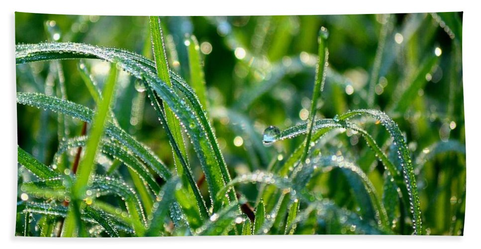 Dewdrops Beach Towel featuring the photograph Dewdrops by Maria Urso