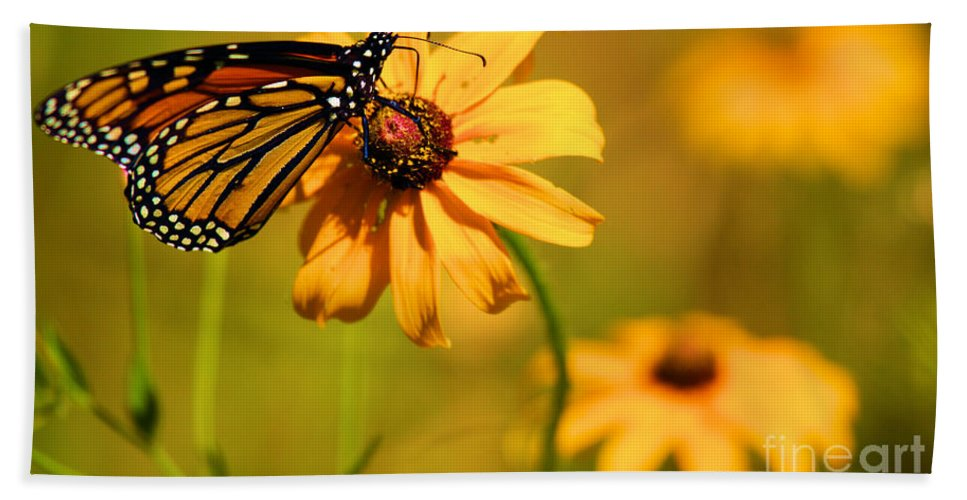 Butterfly Beach Towel featuring the photograph Dinner At Yosemite by Adam Jewell