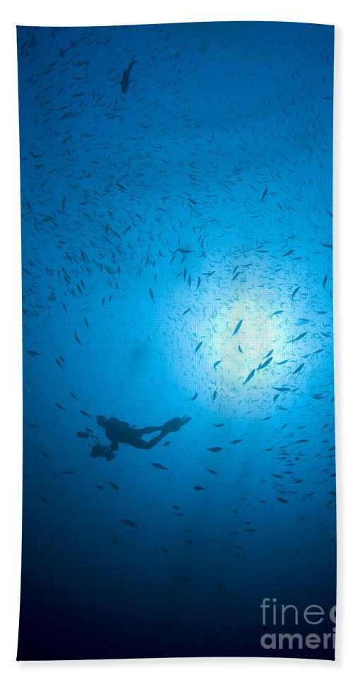 Diver Beach Towel featuring the photograph Diver And School Of Fish In Blue Water by Mathieu Meur