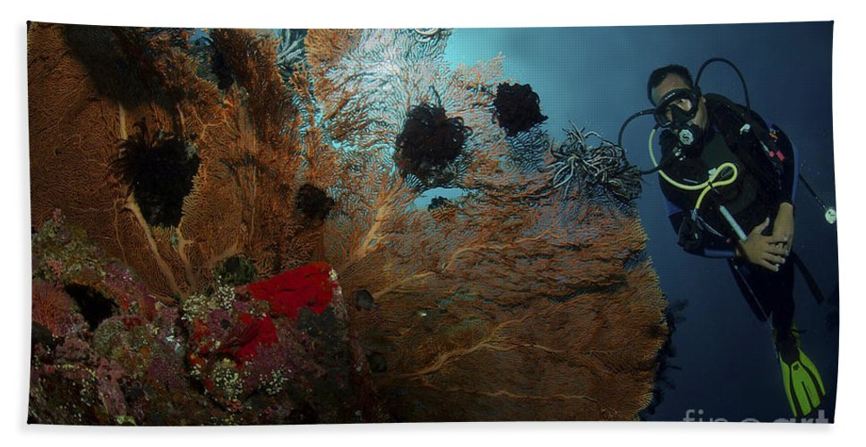 Crinoid Beach Towel featuring the photograph Diver And Sea Fan At Liberty Wreck by Mathieu Meur