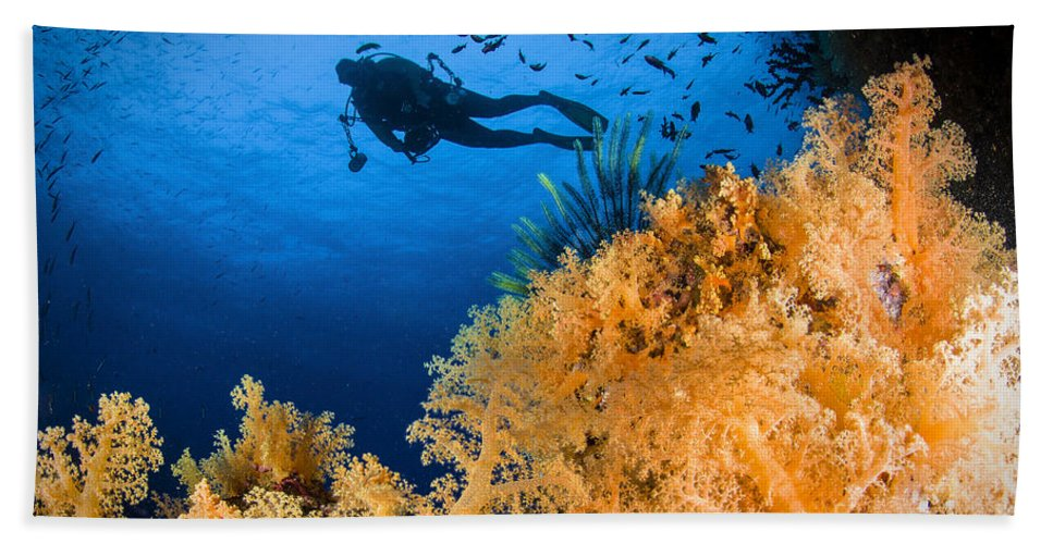 Crinoid Beach Towel featuring the photograph Diver Swimms Above Soft Coral, Fiji by Todd Winner