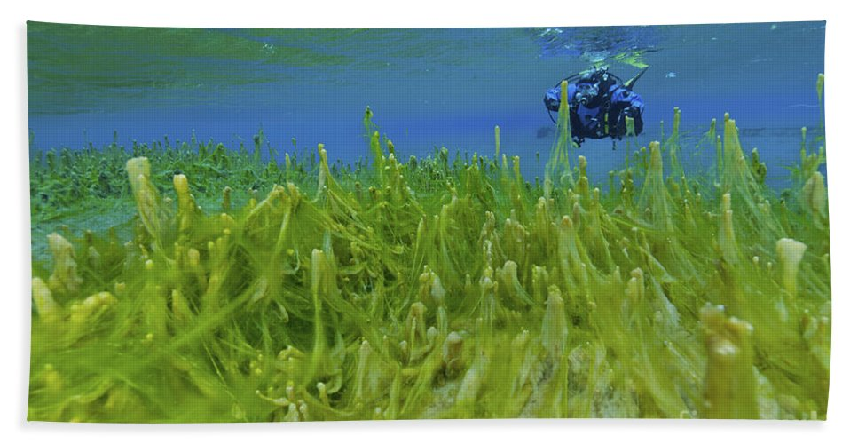 Diver Beach Towel featuring the photograph Diver With Fluorescent Green Algae by Mathieu Meur