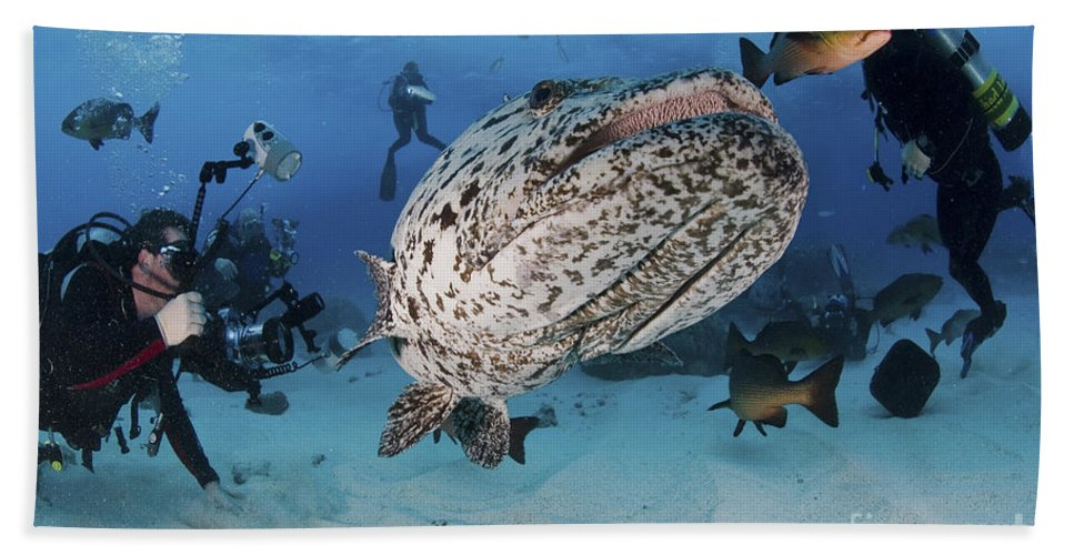 Cod Hole Beach Towel featuring the photograph Divers Photographing A Giant Grouper by Mathieu Meur