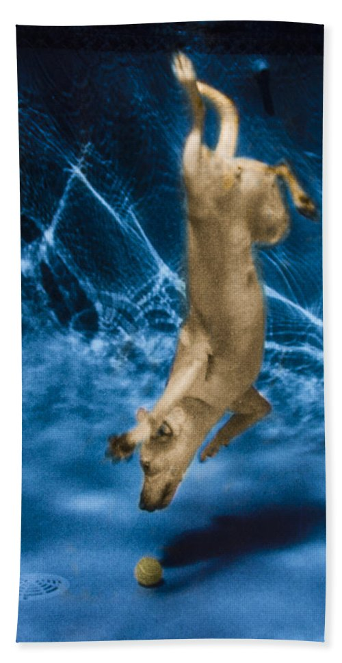 Dog Beach Towel featuring the photograph Diving Dog 2 by Jill Reger