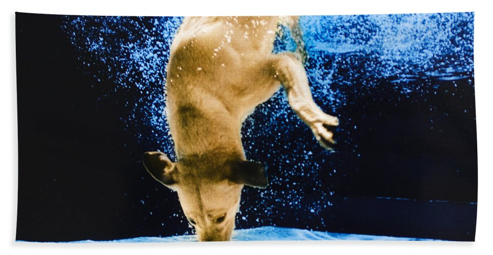 Dog Beach Towel featuring the photograph Diving Dog 3 by Jill Reger