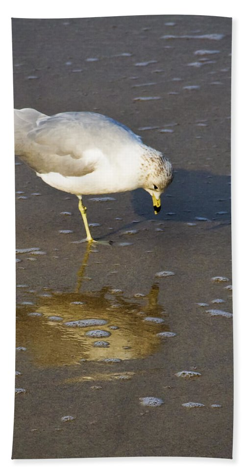 Seagull Beach Towel featuring the photograph Do I Know You by Roger Wedegis