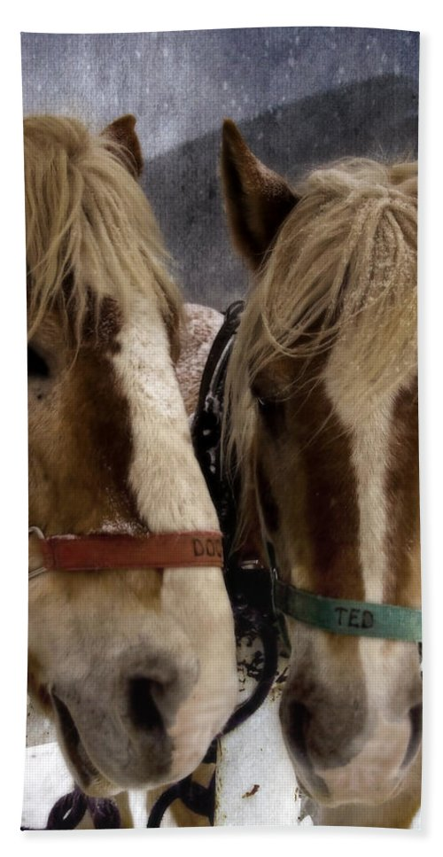 Horses Beach Towel featuring the photograph Doc And Ted by Ellen Heaverlo