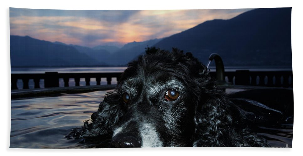 Dog Beach Towel featuring the photograph Dog In A Water Fountain by Mats Silvan