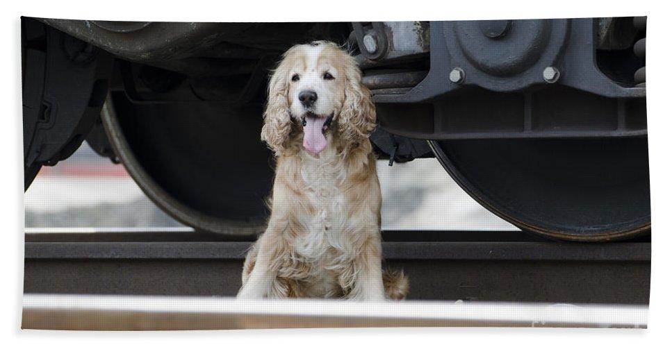 Dog Beach Towel featuring the photograph Dog Under A Train Wagon by Mats Silvan