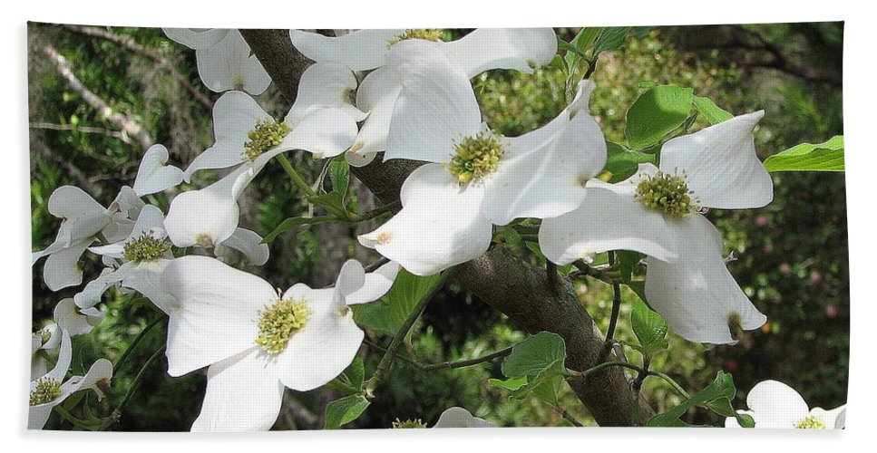 Dogwood Beach Towel featuring the photograph Dogwood Blossoms by Carla Parris