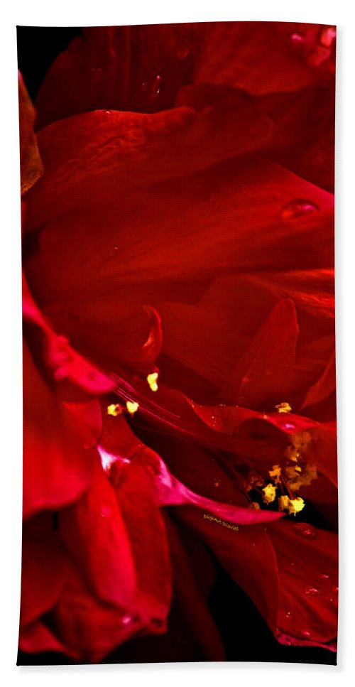 Hibiscus Beach Towel featuring the photograph Double Red by DigiArt Diaries by Vicky B Fuller