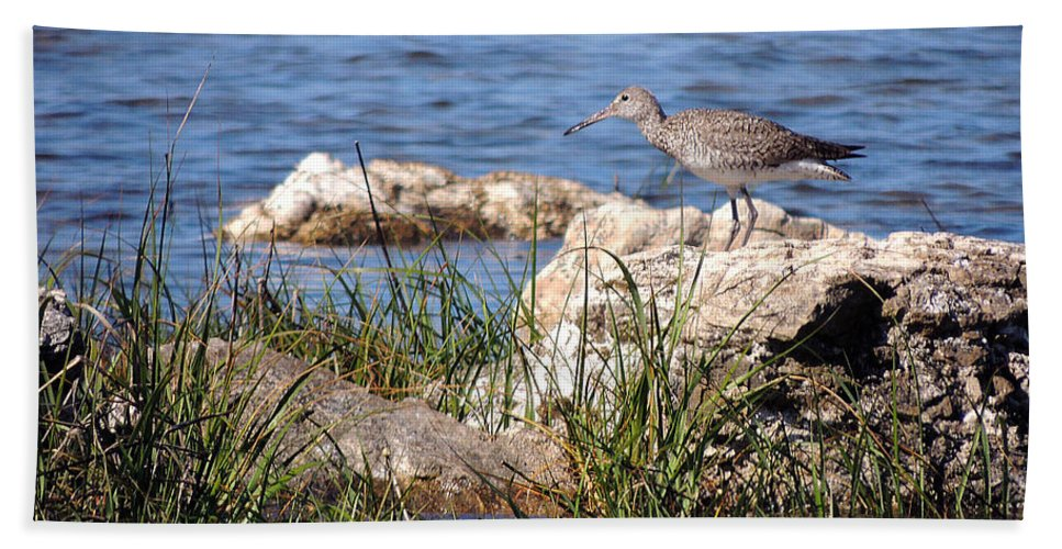 Birds Beach Towel featuring the photograph Dowitcher by Marilyn Holkham