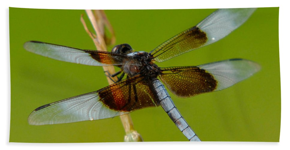 Bug Beach Towel featuring the photograph Dragon Fly Green by Sean Wray