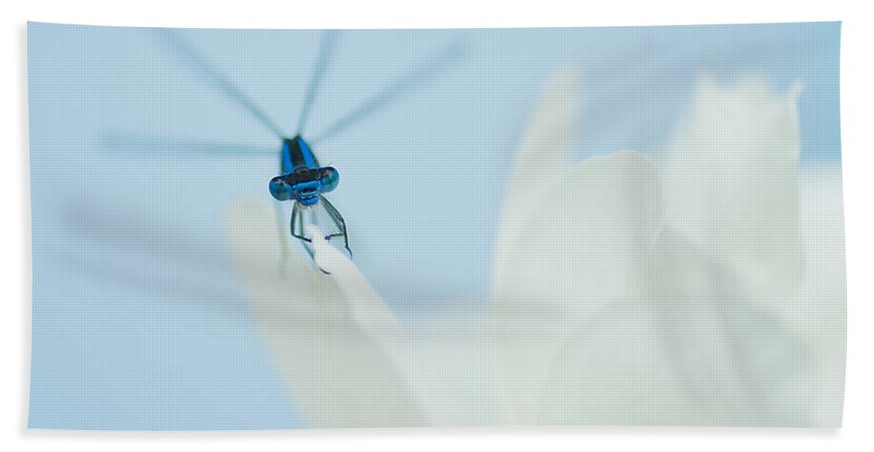 Dragonfly Beach Towel featuring the photograph Dragonfly by Beth Riser