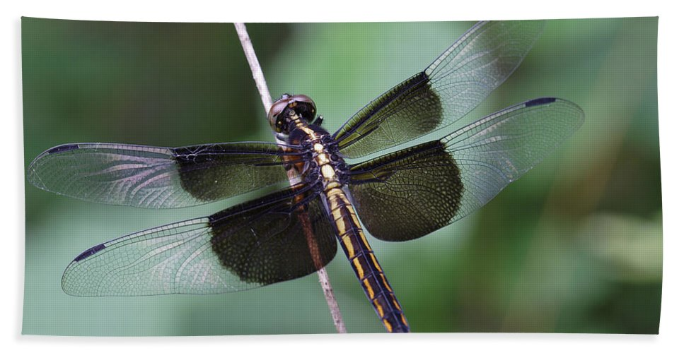 Insect Beach Towel featuring the photograph Dragonfly by Daniel Reed